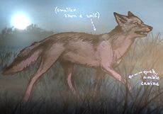Coyote Colored.jpg
